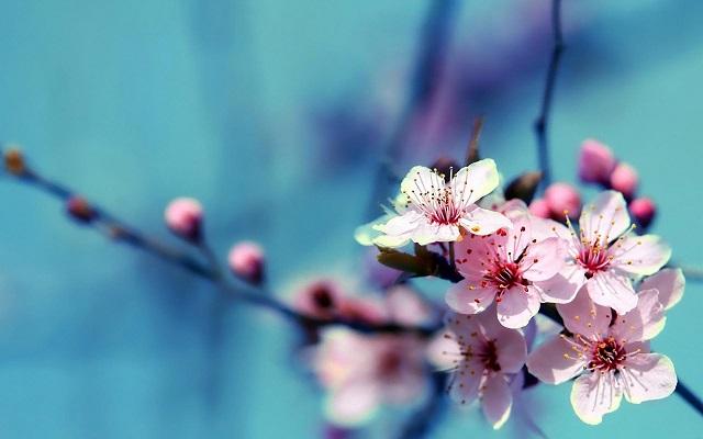 HD-Beautiful-Flowers-Wallpapers-1